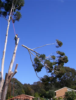 Online Enquiry Sapphire Coast Tree Service Amp Tower Hire