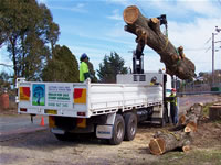 Large log lifted up on crane truck
