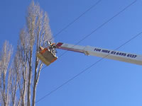 Vegetation management and powerline clearing