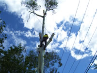 Tree cutting near power lines